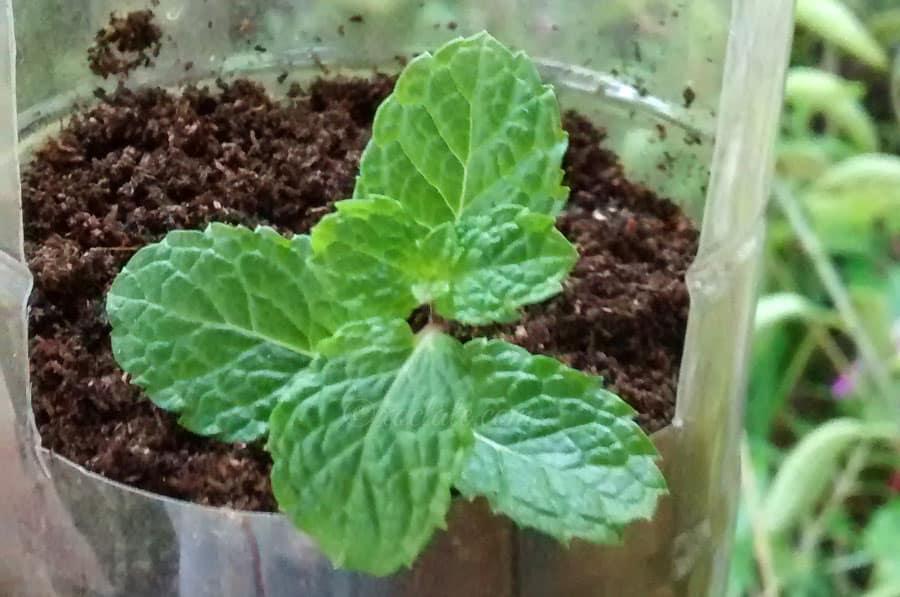 vertical plant result